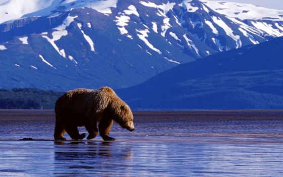 медведь, горы