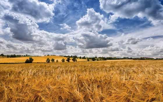 ди, campo, cielo, del, макароны, grano, sfondi, spighe, fresca, mulino, аль,