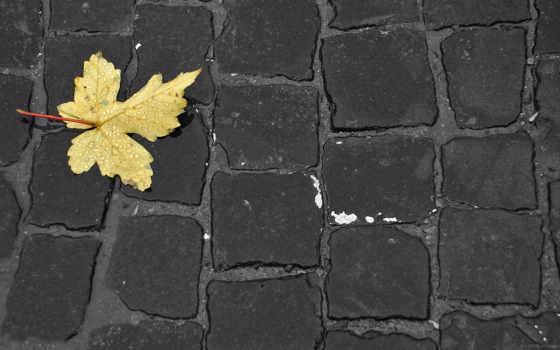 макро, осень, листва, минимализм, креатив, бурковка, капли, фото, природа,