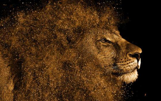 lion, hintergrundbild, tiere, animal, коллекция, bild, hintergrund, anastasia, компьютер, волосы