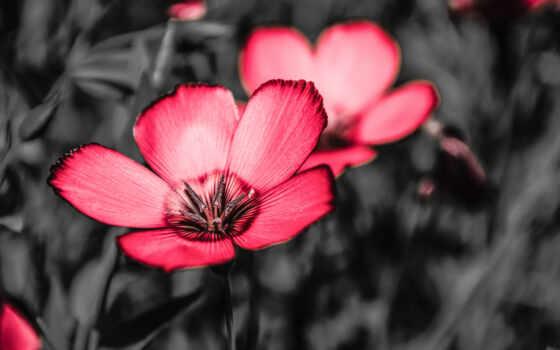 цветы, permission, розовый, лепесток, оформление, слушать, formatı, песнь, website, растение