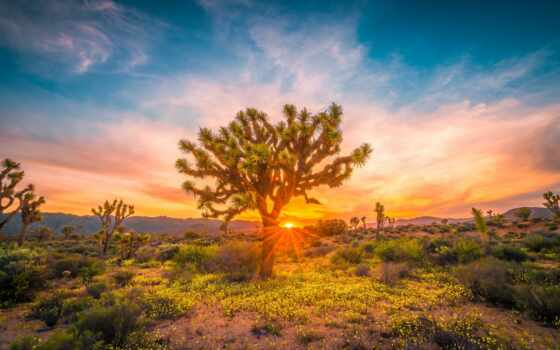пустыня, shrubland, state, unite, трава, national, park, landscape, land, природа