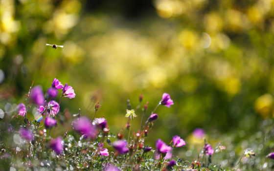 цветы, summer, bumblebee