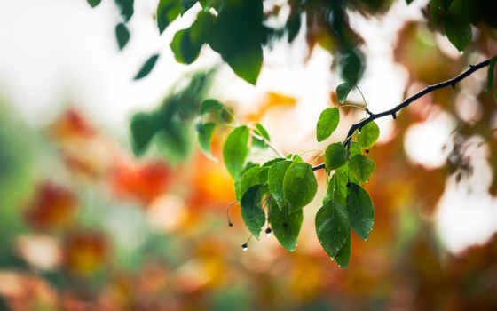 branch, иза, incredible, листьями, разных, unlock, pro, mixed, макро, зелёными, iunlock, весна, листва, slide,