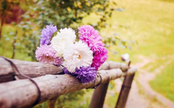 цветы, природа, summer, красиво, дачный, макро, flowers, landscape, хорошо,