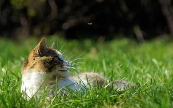 кот, весна, трава, fly, ус, отдых, hunting, движение, зеленое, zhivotnye,