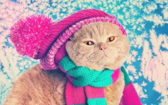 кот, шапка, шапке, картины, частей, шарф, интернет, zhivotnye, домашние,