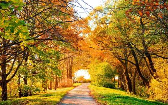 взгляд, совершенн, scenery, природа, trees, landscape, дорога, осень, зелёный,