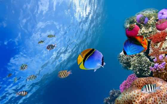 рыбки, world, underwater, тропические, fish, ocean, аквариум, заставки, морские,