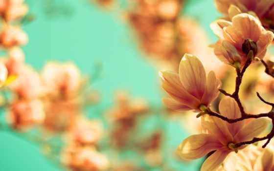 цветы, магнолия  Фон № 50089 разрешение 2880x1800