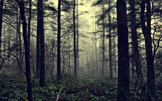 лес, природа, туман