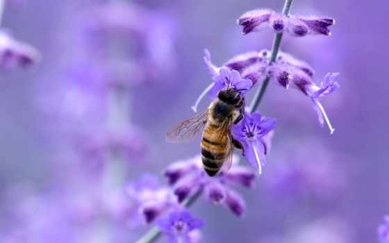 пчелка, фотографий, насекомые, нашем,