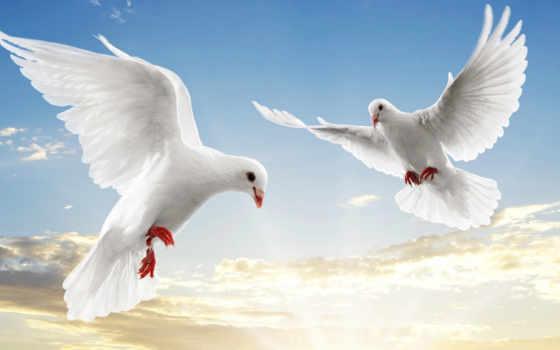 Пара голубей в небе