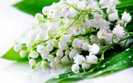 ландыши, цветы, цветов