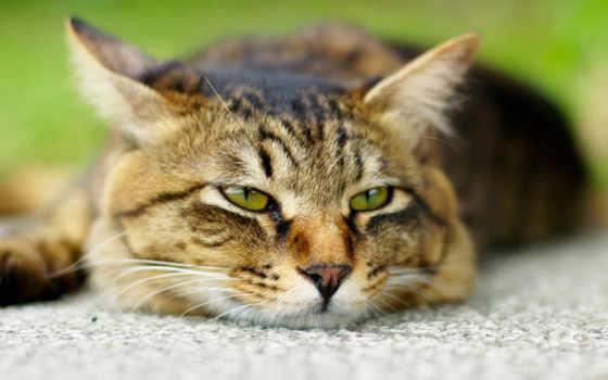 кошки, кот, zhivotnye
