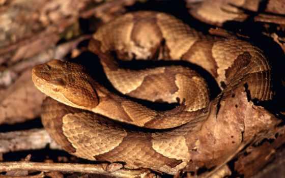 змеи, snake, модный