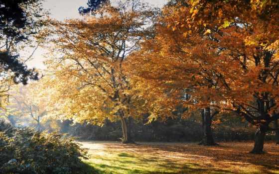 осень, листва, trees, park, желтые, природа, pictures, солнечная, pin,