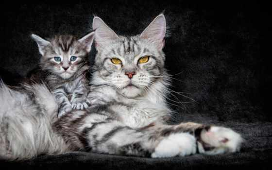 кот, desktop, котенок, кошки, kitty, mein, images,