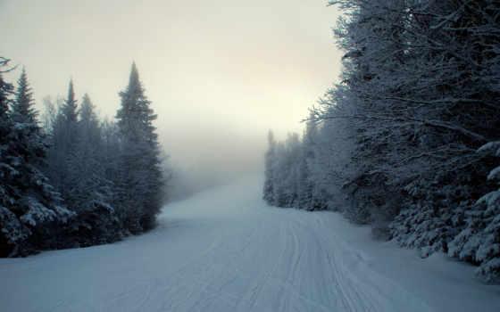 winter, eli, снег, туман, лес, фоны,