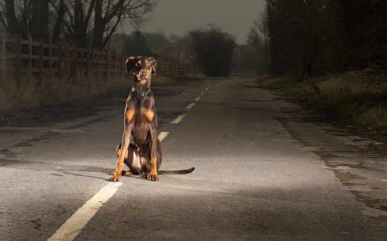 собака, дороге, дорогу