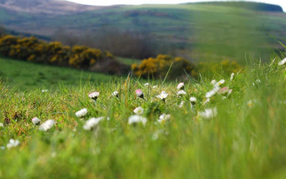 поляна, весна, природа, зелёный, cvety, трава, макро, поле, растения, размытость, summer,