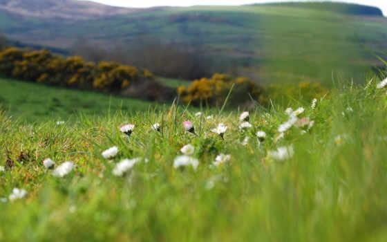 поляна, весна, природа