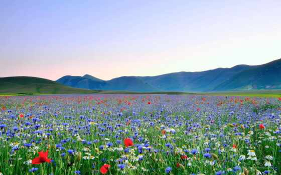 цветы, поле, pour, poppy, небо, ромашка, цвета, фотообои, print, трава, море