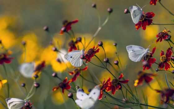 насекомое, природа, заставка, цветы, бабочка, makryi, summer, айфон, plane, небо