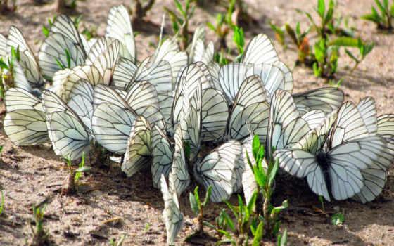 бабочки, крылья, макро