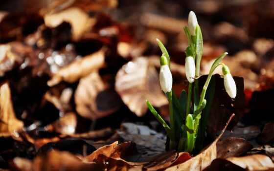 цветы, весна, природа