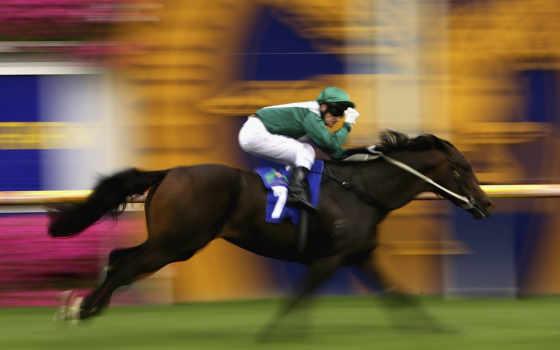спорт, лошадь, всадник
