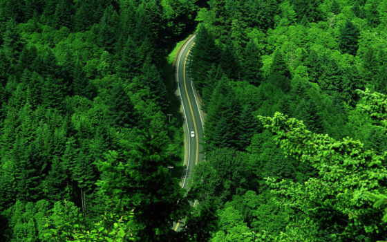 лес, зелёный, дорога