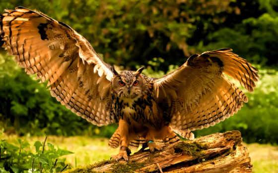 сова, zhivotnye, птица, перья, взгляд, дерево, филин, крылья, страница, browse,