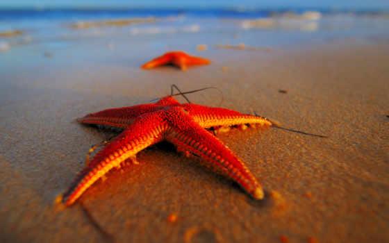 морские, звезды, ракушки, песке, животных, star, звездная, бывают, морская, life,