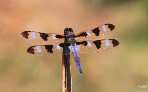 макро, природа, насекомые,