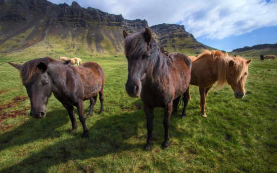 браун, трава, лошадь, поле, можно, you, file,