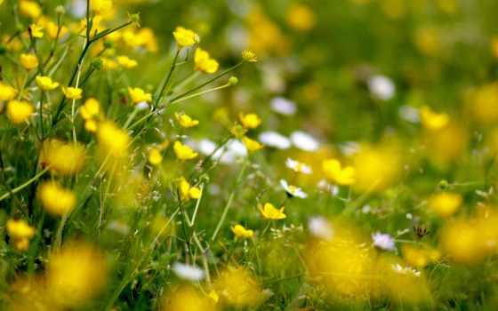 поляна, весенняя, теги, хорошем, всех,
