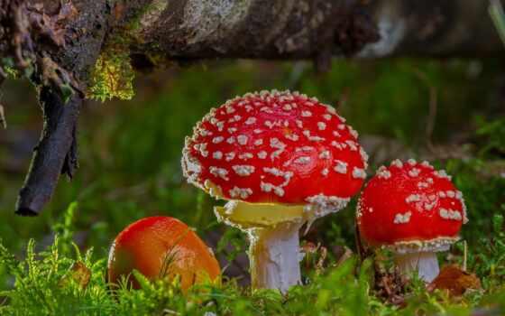 пина, mushroom, hunting, осень