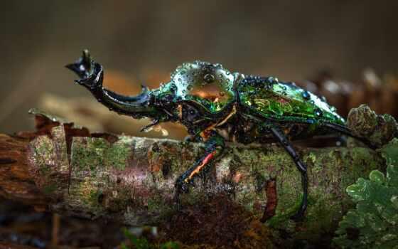 насекомое, жук, makryi, день, narrow, хороший, drop, water