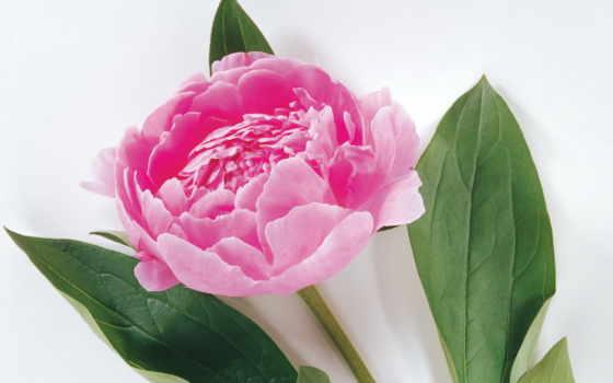 Цветы 2196
