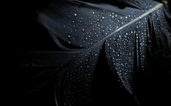 feather, перо, wet, черный, капли, минимализм,