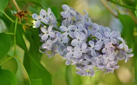 Цветы 20036
