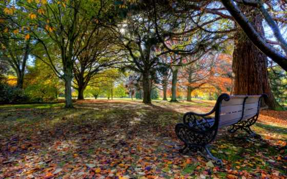 new, zealand, pollard, park, blenheim, осень, листья, деревья, скамейка, новая, nature,