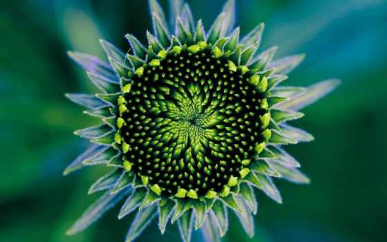 unusual, цветы, загрузил, мэри,