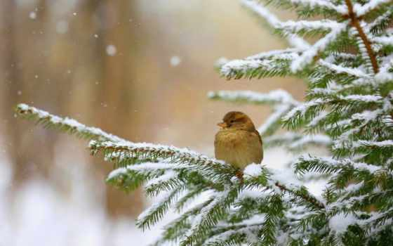 winter, природа, птицы