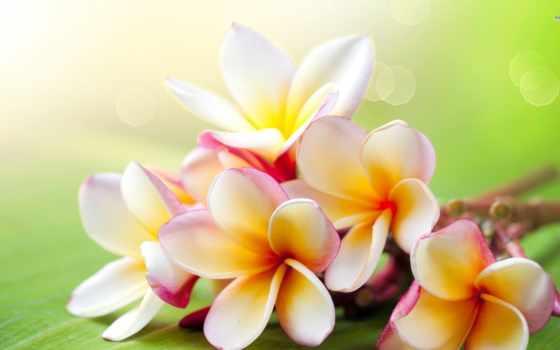 kartki, flowers, imieninowe