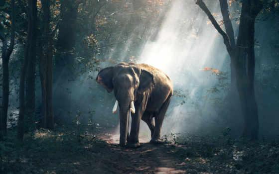 животные, слон, animals, free, iphone,