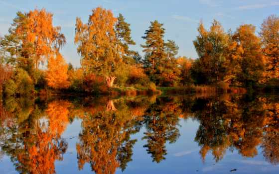 осень, природа, регистрации, trees, телефон,
