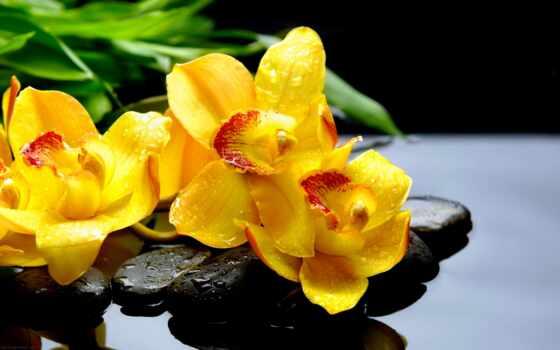 орхидея, картинка, yellow, фотообои, камень, цветы, drop, руб