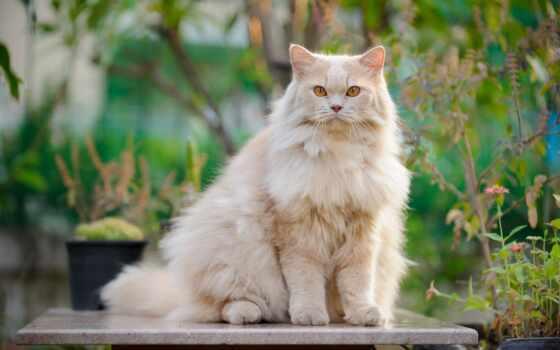 кот, kot, domestic, животное, long, киска, tom, mushuklar, памятник, оставить